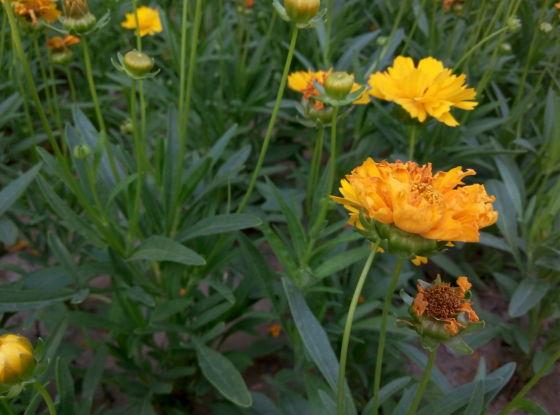 魅蓝Note 2在户外拍摄花草