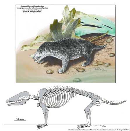 科技时代_科学家发现长有现代牙齿的侏罗纪哺乳动物