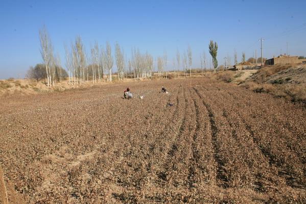 科技时代_图文:田地里人们忙碌劳作着
