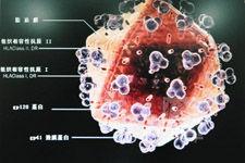 中国科学家发现抑制HIV囊膜蛋白合成新途径