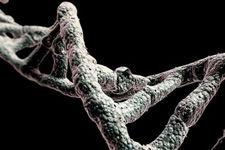 """最古老人类DNA或助揭示""""走出非洲""""之谜"""