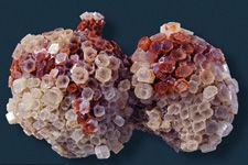 科学家发现1亿年前微生物证据:地下20公里