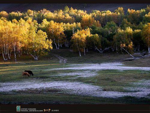 坝上草原塞外秋色牛羊如云骏马奔腾