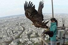 白尾鹰背相机翱翔巴黎上空:已绝迹法国50年
