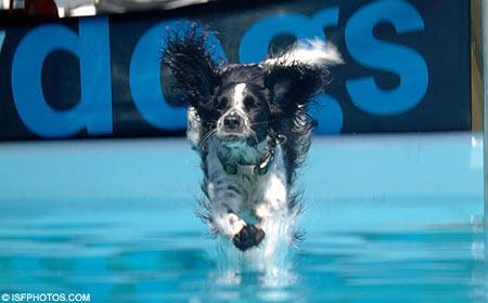 英国举办狗狗跳水大赛(组图)