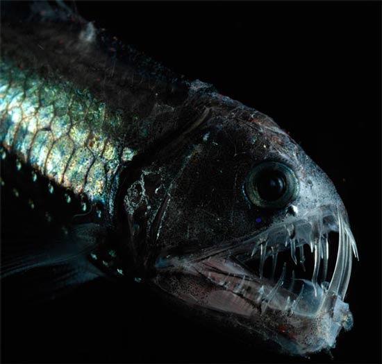 北大西洋3500米深处发现奇特海洋生物(组图)