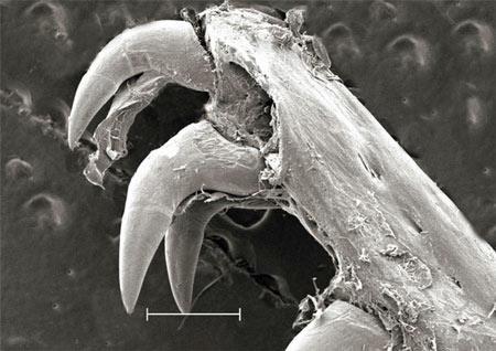 美科学家发现海鳗捕食犹如外星异形(组图)