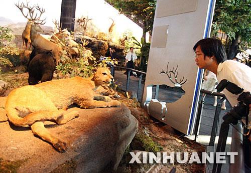 上海科技馆千万美金标本打造动物世界(组图)