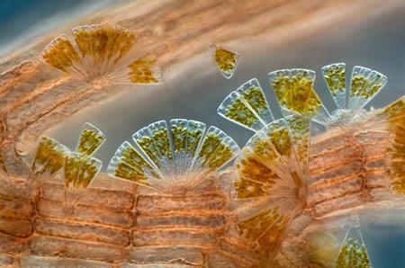 2007年最佳显微照片转基因老鼠胚胎居首(图)