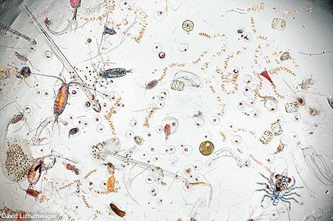 显微镜下看海水:动植物的大观园(组图)
