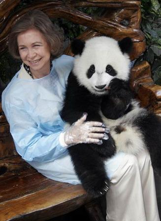 """""""   大熊猫幼稚园中,3只不到一岁的大熊猫,原本慵懒地坐在草地上."""