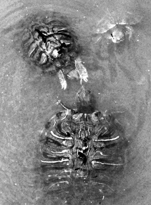 乌龟素描步骤图片