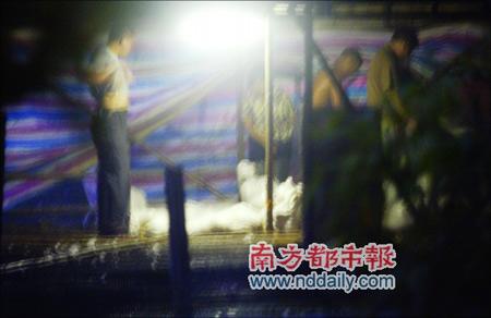 广州市番禺9000只鸭子暴毙3万只被活埋
