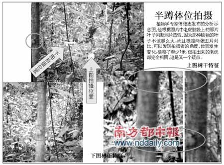 专家称敢担保华南虎照片有假劝拍照者自首(图)