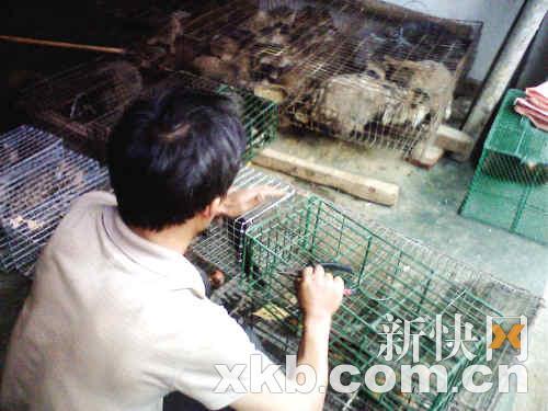南海一食品城狂卖保护动物
