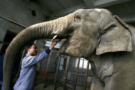 动物饲养员_动物饲养员熊猫与我的快乐生活