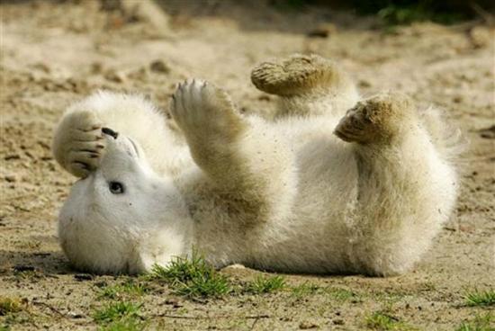 美国媒体评出十种最可爱的动物宝宝(图)