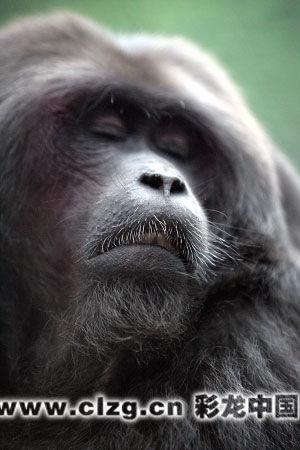 中国猴子种类_教育新闻 正文           彩龙中国10月14日报道\