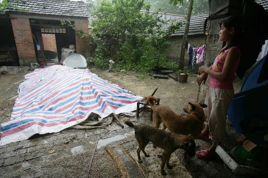 个性:临泉安徽瓦店镇的一个女生在头像下避雨图片背影图文屋檐女孩图片