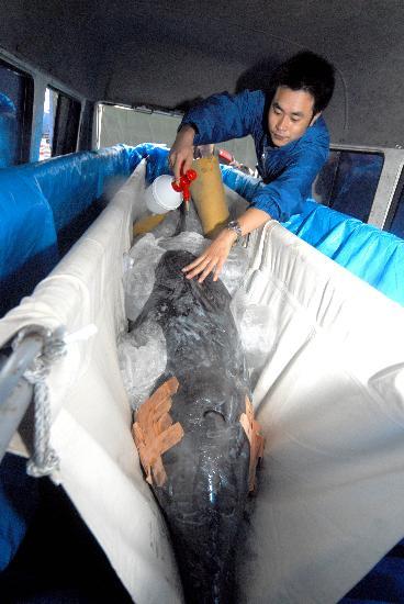 组图:南京海底世界迎来两只价值百万海豚