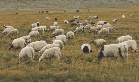 图文:西藏仲巴县重视草原建设