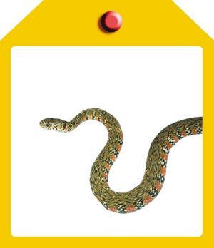《西溪湿地两栖类,爬行类动物图谱》