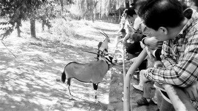 北京动物园灵长类动物被游客喂出糖尿病