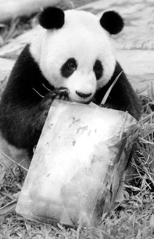 昨日,记者从香江野生动物世界了解到,可爱的动物各有各的避暑高招