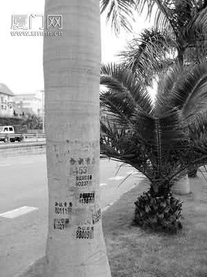 """一棵椰子树长了6块""""牛皮癣"""""""