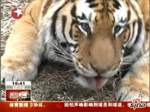 视频:西安秦岭野生动物园观光车轧死3岁男童