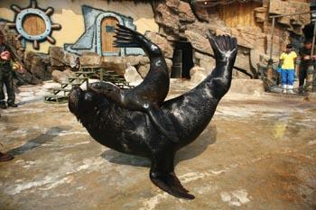 """老虎滩极地海洋动物馆里上演动物版""""父女情深""""偏心把"""
