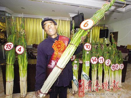 葱王大赛冠军长达2.18米(图)