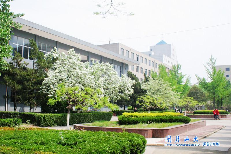 山东大学校园风光:中心校区美景-山东大学校园风光 中心校区图片