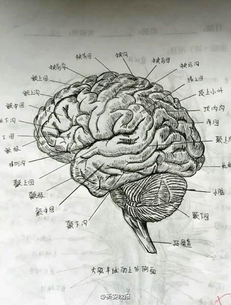 女大学生手绘人体解剖图