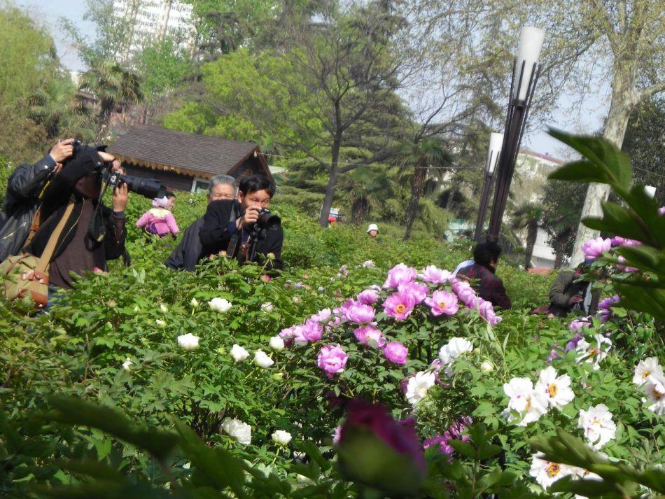 以儿童公园为主体,融现代园林建筑风格、洛阳牡丹文化的公园.全