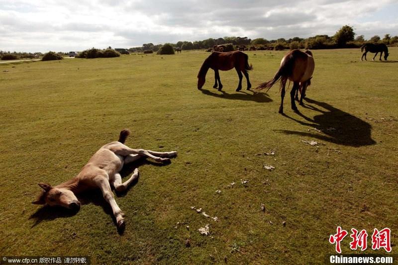 图片来源:CFP视觉中国-组图 世界睡眠日图刊 欣赏动物超萌睡姿
