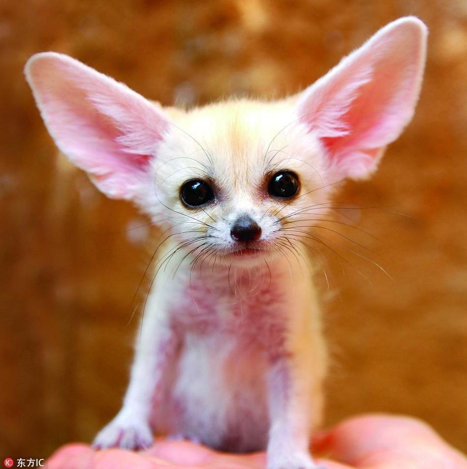 这些动物你认识吗:十种罕见动物的宝宝萌照_高清图集