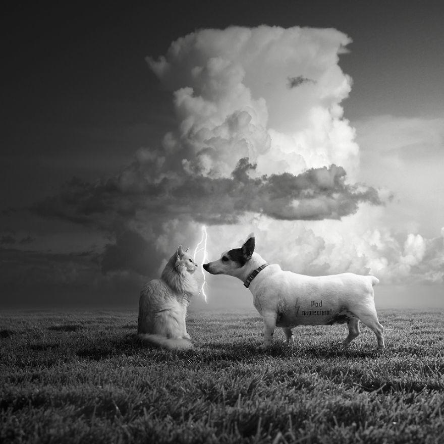 颠覆传统思想 人类灭绝后动物占领地球