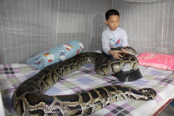 13岁男孩与巨蟒同居12年共睡一床