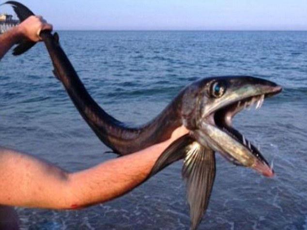 滩发现长相恐怖深海怪鱼