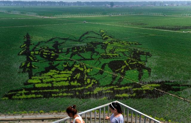 让图案呈现出凹凸有致的立体画面.(新浪)-稻田3D画哪吒造型高清图片