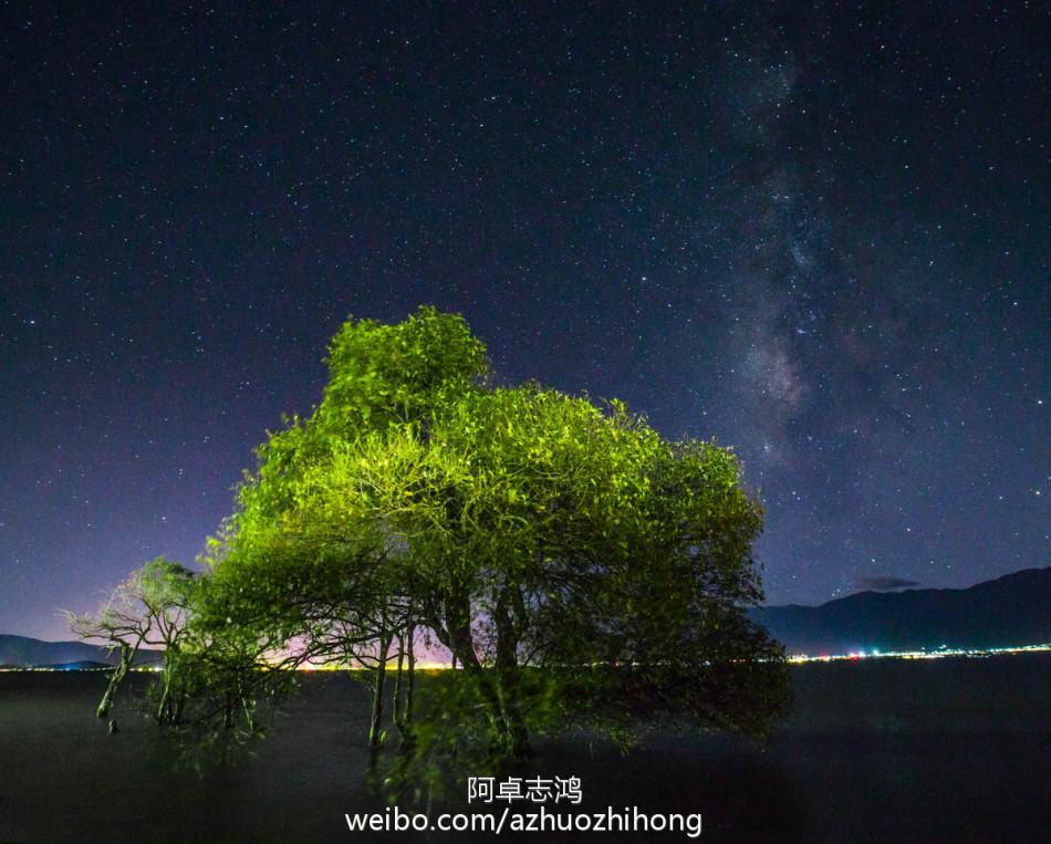 生长在洱海里的一棵树 摄影师的最爱