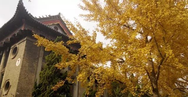 河南15所大学校园秋景PK 哪个拍的最美图片