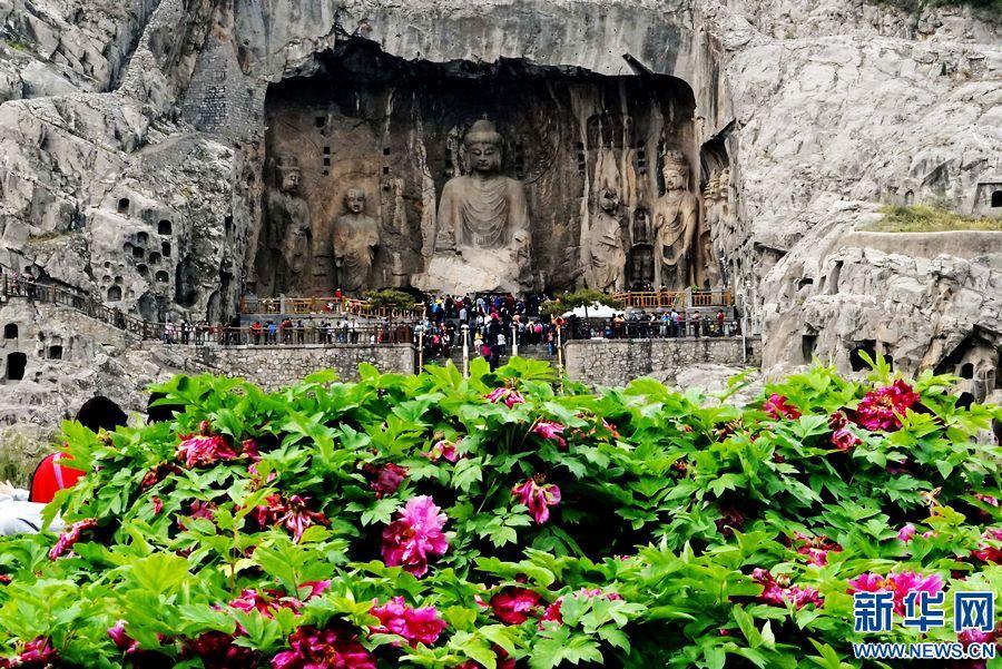 与古老的石刻佛像共同构成独特的风景.    摄 -河南洛阳龙门牡丹俏