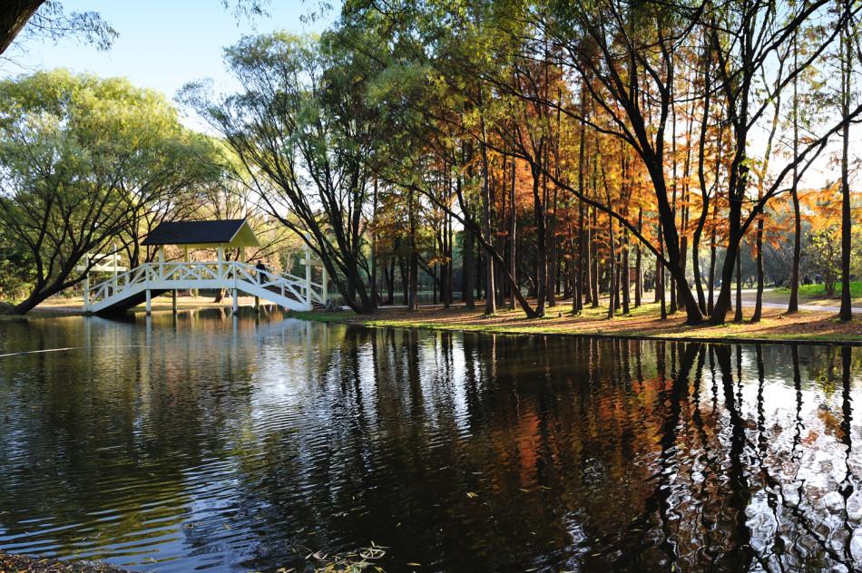 上海共青森林公园 亲近梦幻自然