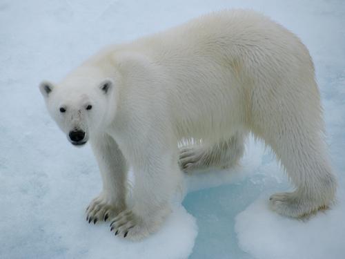 全球变暖加速北极地区冰雪融化_高清图集_新浪网