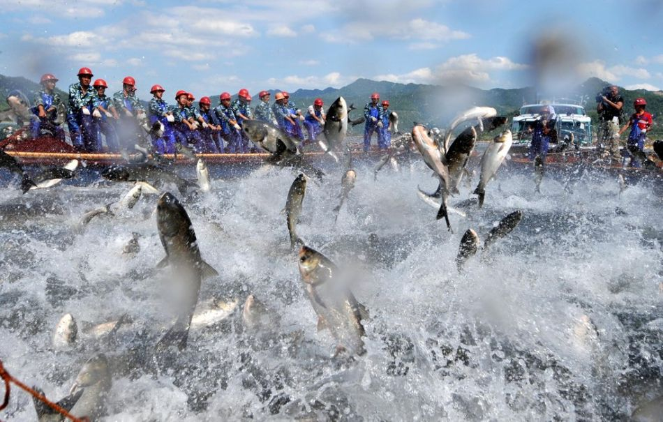 杭州千岛湖上演巨网捕鱼