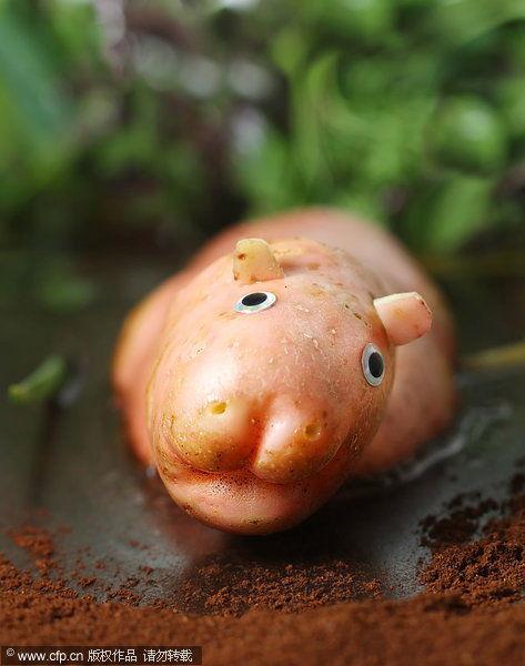 设计师用水果蔬菜创作动物造型食材艺术_高清图集