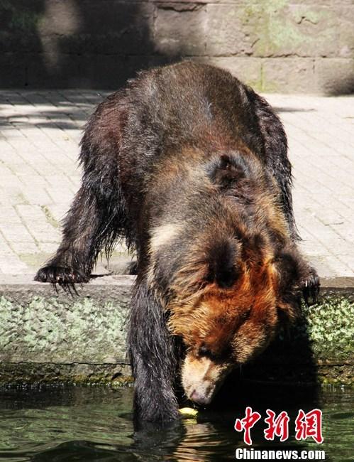 重庆动物园搭凉棚喷水为动物消暑