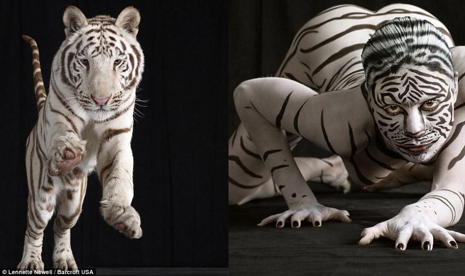 裸体模特彩绘斑纹模仿动物拍摄对比照